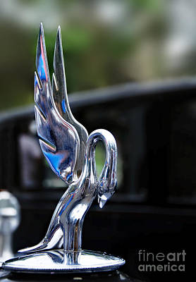 Photograph - 1934 Packard Eight - Hood Ornament by Kaye Menner