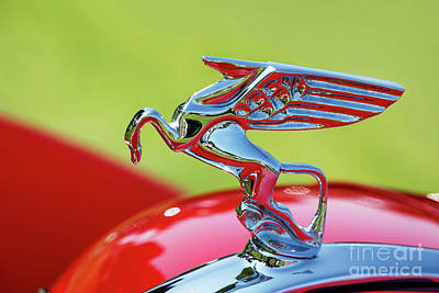 Photograph - 1935 Amilcar Hood Ornament by Dennis Hedberg