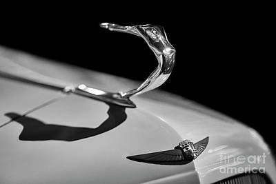 Photograph - 1935 Cadillac Hood Ornament by Dennis Hedberg