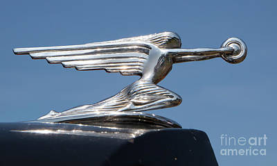 Photograph - 1936 Packard Hood Ornament by Kevin McCarthy