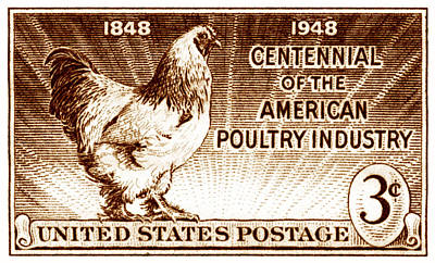 Painting - 1948 American Poultry Stamp by Historic Image