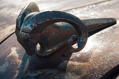 Photograph - 1950s Dodge Ram Hood Ornament by Chris Flees