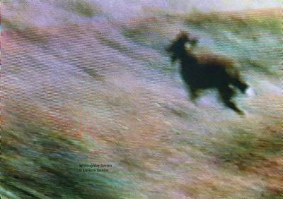 Photograph - 1950's - Navajo Dog by Lenore Senior and Willoughby Senior