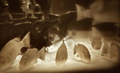 Historical Photograph - 1954 Fish At Marineland Florida by Marilyn Hunt