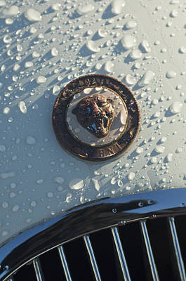1954 Jaguar Xk120 Roadster Hood Emblem Print by Jill Reger