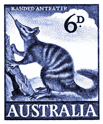Anteater Digital Art - 1959 Australia Banded Anteater Postage Stamp by Retro Graphics
