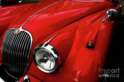 Red Jaguar Art Print