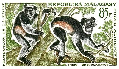 Lemur Digital Art - 1961 Madagascar Indri Lemur Postage Stamp by Retro Graphics