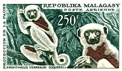 Lemur Digital Art - 1961 Madagascar Lemur White Sifaka Stamp by Retro Graphics