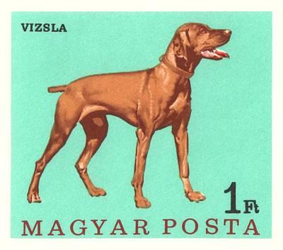 Retriever Digital Art - 1967 Hungary Vizsla Dog Postage Stamp by Retro Graphics