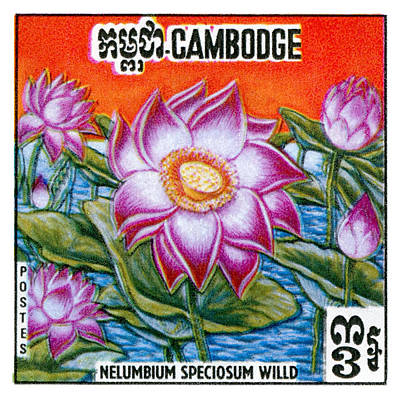 Lily Digital Art - 1970 Cambodia Lotus Flower Postage Stamp by Retro Graphics