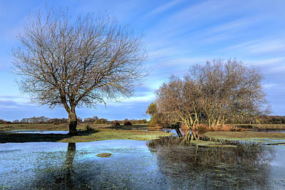 Wasser Photograph - New Forest - England by Joana Kruse