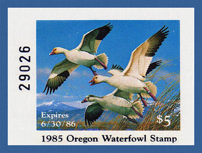 Painting - 1985 Oregon Waterfowl Stamp by Lanjee Chee
