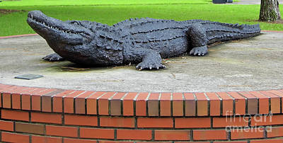Photograph - 1997 Bull Gator by D Hackett