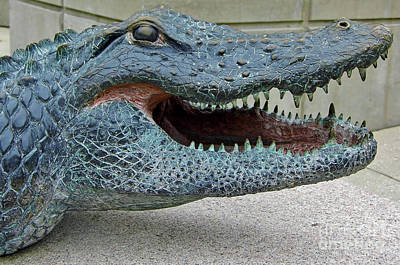Photograph - 1998 Bull Gator Portrait by D Hackett