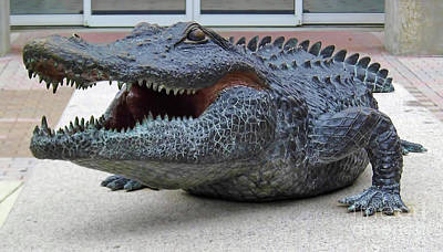 Photograph - 1998 Bull Gator Up Close by D Hackett