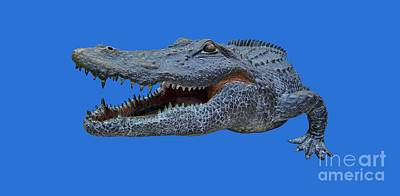 Photograph - 1998 Bull Gator Up Close Transparent For Customization by D Hackett