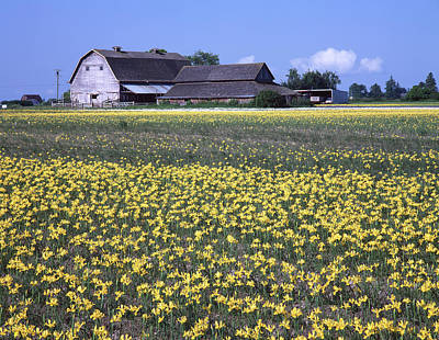Photograph - 1a4312 Daffodil Farm Washington by Ed Cooper Photography