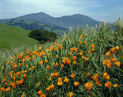 1a6493 Mt. Diablo And Poppies Art Print