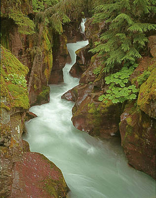 Photograph - 1m8115 Avalanche Gorge Mt by Ed Cooper Photography