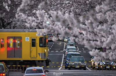 Wall Art - Photograph - まだまだ桜の見頃です。🌸 by Yuuki Tomiki