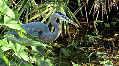 Photograph - A Bird In The Bush by Carol Bradley
