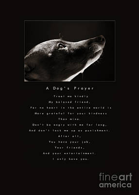 Praying Photograph - A Dog's Prayer  A Popular Inspirational Portrait And Poem Featuring An Italian Greyhound Rescue by Angela Rath