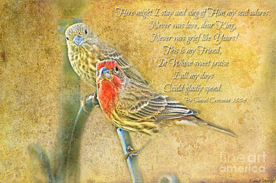Photograph - A Pair Of Housefinches With Verse Part 2 - Digital Paint by Debbie Portwood