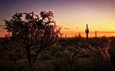 Photograph - A Pastel Cholla Sunset  by Saija Lehtonen