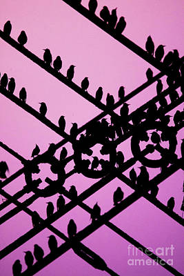 Aberystwyth Pier And Starlings At Dusk Art Print by Keith Morris