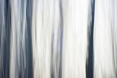Photograph - Abstract Digital Painting Of A Thick And Heavy Wooded Forest At  by Alex Grichenko