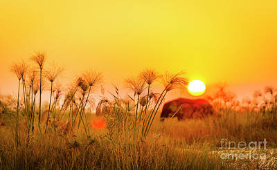 Royalty-Free and Rights-Managed Images - Africa Background by Tim Hester