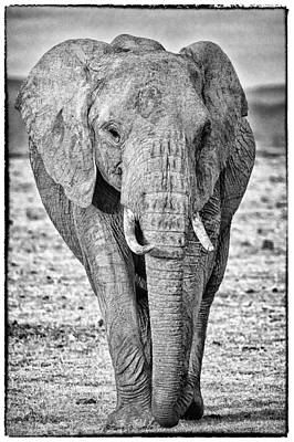 Photograph - African Elephants In The Masai Mara by Perla Copernik
