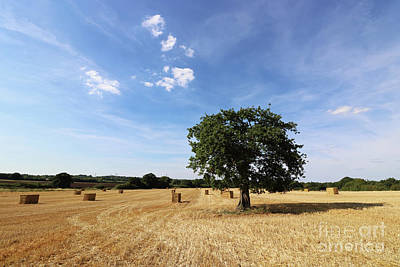 Photograph - After The Harvest England by Julia Gavin