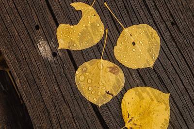 Photograph - After The Rain by Jonathan Nguyen