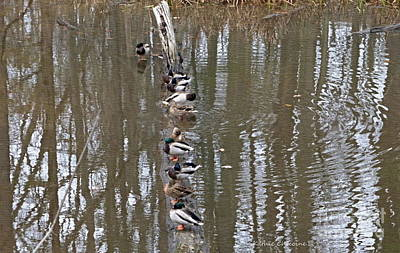 Photograph - All In A Row by Kathie Chicoine