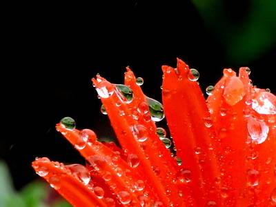 Photograph - All Wet by Betty-Anne McDonald