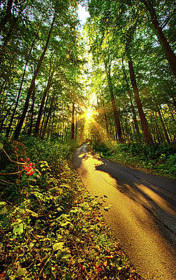 Photograph - Along The Way by Phil Koch