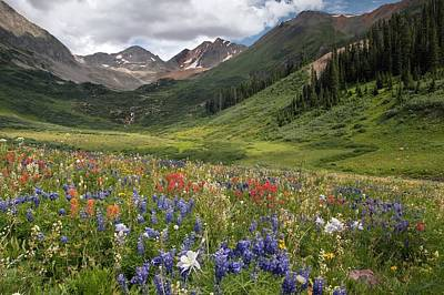 Alpine Flowers In Rustler's Gulch, Usa Art Print