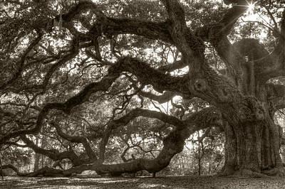 Angel Oak Tree Photograph - Angel Oak Live Oak Tree by Dustin K Ryan