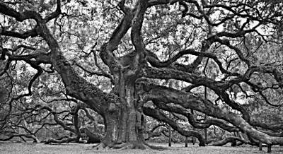 Photograph - Angel Oak by Steven Liveoak