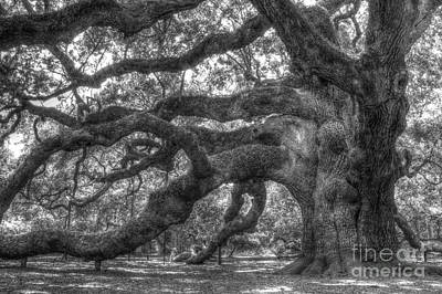 Oak Trees Photograph - Angel Oak Tree Charleston Sc by Dustin K Ryan