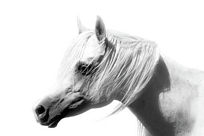 Arabian Horse Photograph - Arabian Mare by ELA-EquusArt