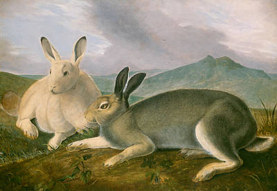 Arctic Landscape Painting - Arctic Hare by Mountain Dreams