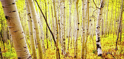 Photograph - Aspen Grove II by Scott Kemper