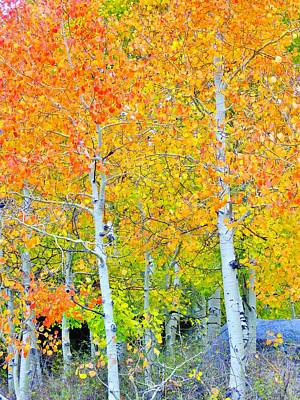 Photograph - Aspen Orange by Marilyn Diaz