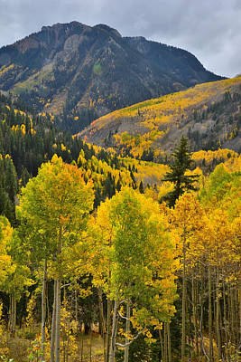 Photograph - Aspen Valley by Ray Mathis