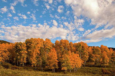 Photograph - Aspens And Sky by Steve Stuller
