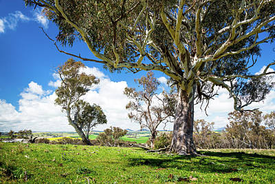 Photograph - Australian Countryside by Max Neivandt
