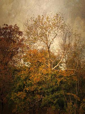 Autumn Foliage Photograph - Autumn Arbor by Jessica Jenney